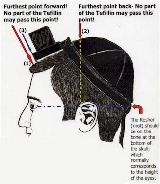 Jew's-box or Tefillin on the head