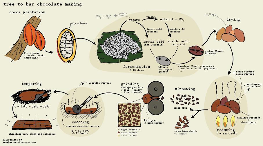chocolate_making_process_scheme